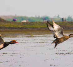 With bird habitats ranging from a lake in the heart of Kolkata to the forests in the northern hills, West Bengal is the perfect winter destination for bird watching