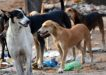 New Town plans shelter for sterilizing strays