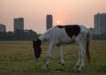 Help pours in for 120 starving horses on Maidan; mounted cops chip in too